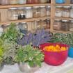 Herbs in Bowls: Geranium, Rosemary, Lavender, Roses