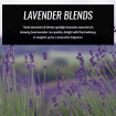 lavender-essential-oil-blends