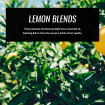 lemon-essential-oil-blends