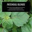 patchouli-essential-oil-blends