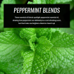 peppermint-essential-oil-blends