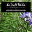rosemary-essential-oil-blends