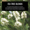 tea-tree-essential-oil-blends